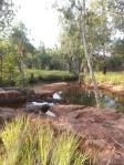 Dunlop Swamp